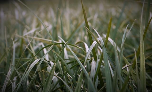 Forest lawn... @mangiasiwele 2019.