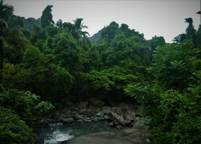 Lush forest in the mountains above Arawa. Bougainville is the aesthetically greenest place I have ever been to.